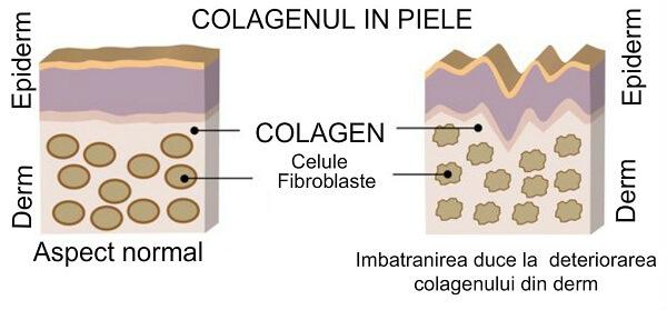 colagen in piele